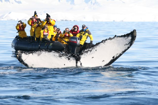Antarctica_Quark PAX whale watching-tail